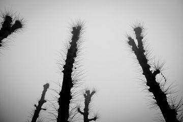 Bomen in de mist van Fabian Schulting
