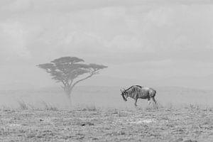The lone range black and white van Jessica Blokland van Diën