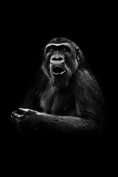 Zeer verbaasde (emoties) vrouwelijke gorilla's (emoties) van Michael Semenov