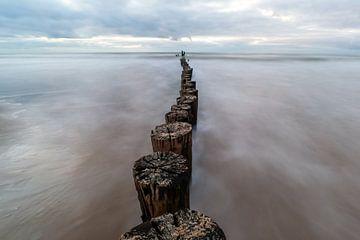 Palen naar de horizon van Peter Heins