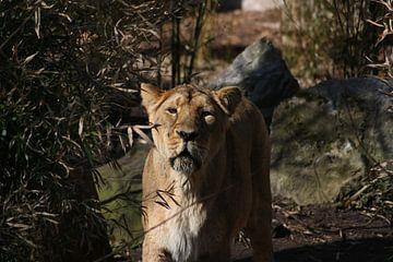 Koning(in) van de jungle! von Angelo de Bruin