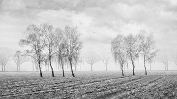 Winter landschap met prachtige bomen in mistige field_2 van Tony Vingerhoets