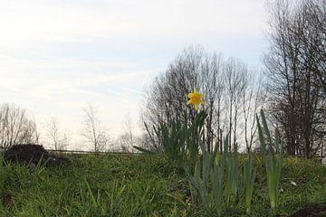 Eenzame narcis van Davey Simons