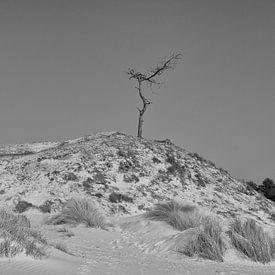 Solitaire au sommet sur Jaco Verheul