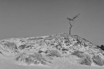Lonely at the top van Jaco Verheul