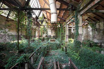 usine abandonnée avec beaucoup de végétation sur Kristof Ven