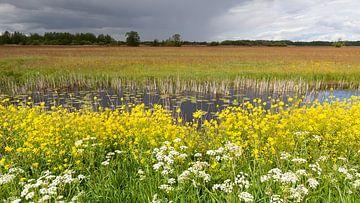 Frühlingsblumen in der Wieden von Dick Doorduin