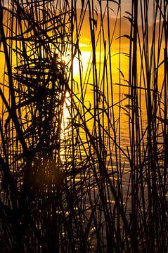 Rietkraag aan het IJsselmeer bij zonsopkomst von Erik van Riessen