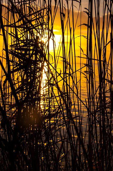 Rietkraag aan het IJsselmeer bij zonsopkomst van Erik van Riessen