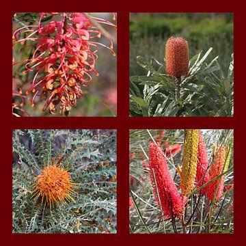 Collagw Of Australian Proteaceae Flowers van Ines Porada