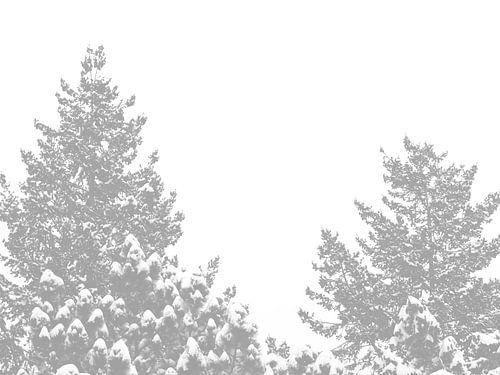 Nadelbaum-Spitzen mit schneebedeckten Spitzen