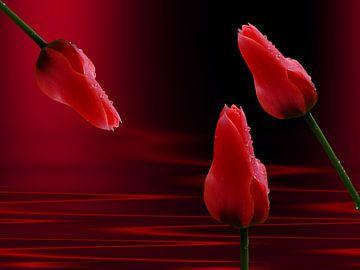 Nasse Tulpen van Martina Fornal