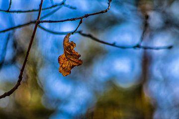 Herfstkleuren (2x3) van Timo Bergenhenegouwen