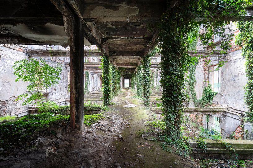 Verlassener gewachsener Korridor. von Roman Robroek