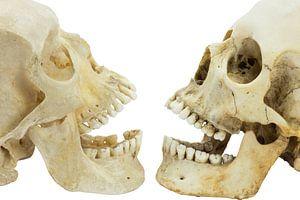 Twee schedels van mensen tegenover elkaar