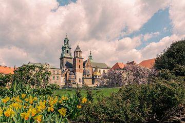 Der Frühling ist schön in Krakau von Nynke Nicolai