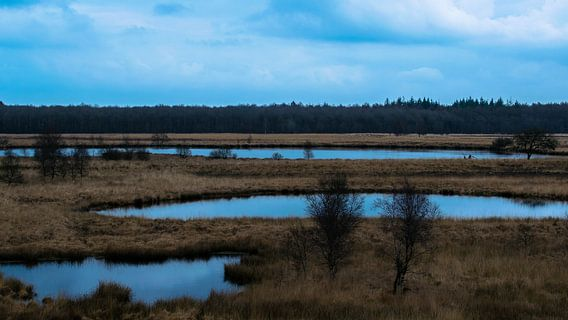 Oudste heide veld in noord nederland van Tom Holmes