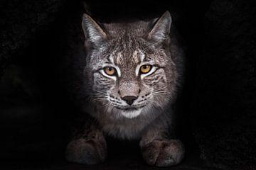 Uitbeeldingen van de lynx met een volledig zwart gezicht op de achtergrond van een grote kat. van Michael Semenov