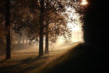 Licht und Schatten von Jana Behr