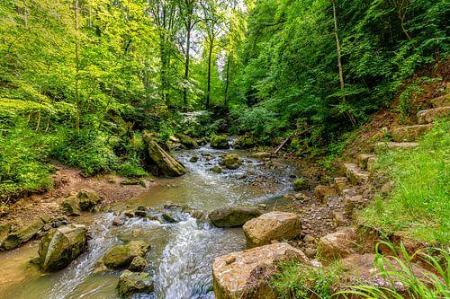 Mullerthal Trail VII
