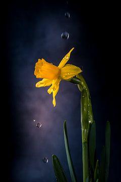 Narcis druppels van natascha verbij