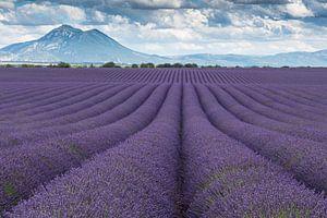 Lavendelveld Valensole met berg
