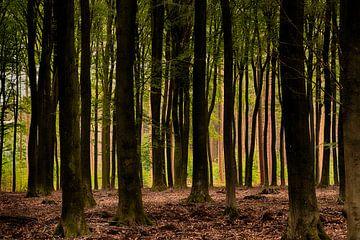 Bomensfeer van Rob De Jong