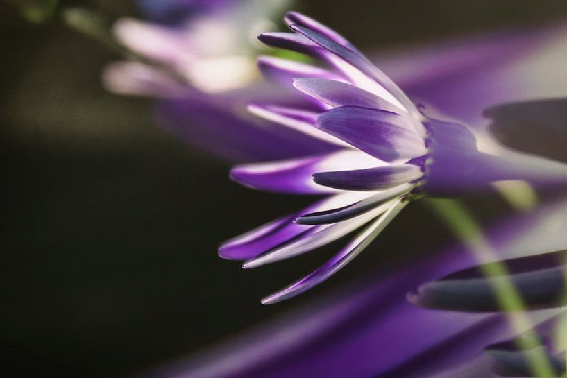 lentebloeiers van Yvette Bauwens