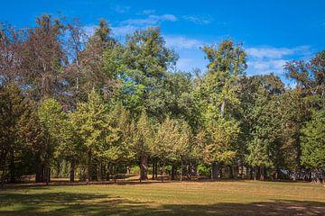 bos in herfstkleuren van ChrisWillemsen