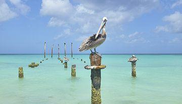 Pelikan auf Pfahl von Wim van Berlo