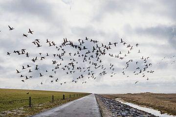 Overstekende vogels op Ameland van Van Kelly's Hand