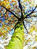 wervelwind ; dol op herfst! van Jessica Berendsen thumbnail