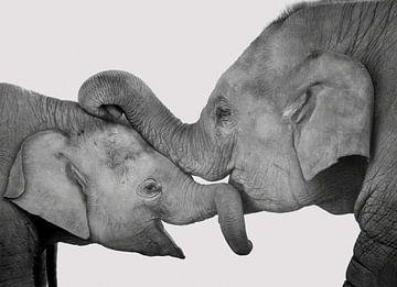L'amour de la mère et l'enfant, les éléphants câlins sur Rietje Bulthuis