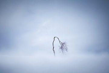 Het eenzame boompje