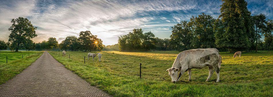 Koeien bij zonsopkomst van John Bouma