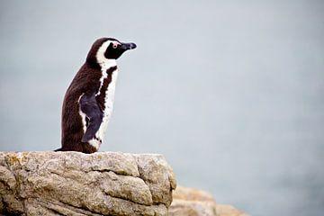 Penguin with a Vision sur Guy Florack