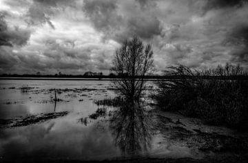 Überschwemmtes Land an der IJssel bei Zwolle von nol ploegmakers