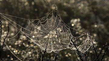 Spinneweb van Yvonne van der Meij