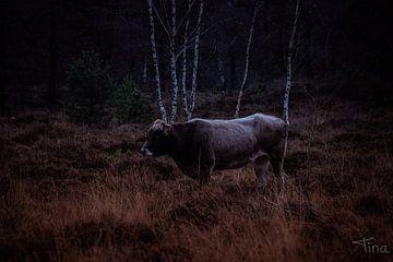 Graue Kuh zwischen dem Heidekraut von Tina Linssen