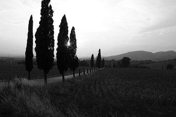Sonnenuntergang Italien Toskana im Sommer schwarz-weiß von Edith Wijte