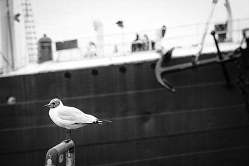 Tierischer Hafenbewohner van Bernd Garbers