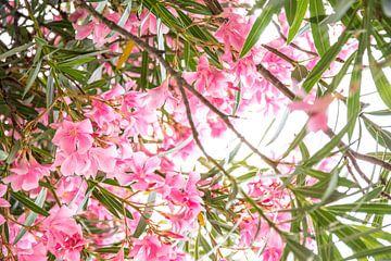 Rosa tropische Blumen an einem sonnigen Tag von Iris Koopmans