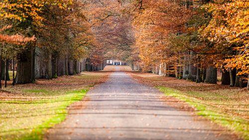 Wandelpad in park met herfstkleuren