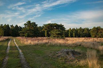 bleoiende heide landschap van Peter van der Wal