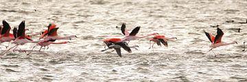 flamingo's 3  van Marloes van der Beek-Rietveld
