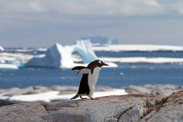 Ezelspinguïn in Antarctica van Angelika Stern