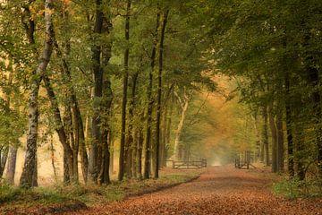 bos in de herfst van Ina Hendriks-Schaafsma