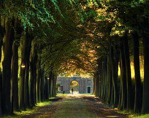 A walk down the lane