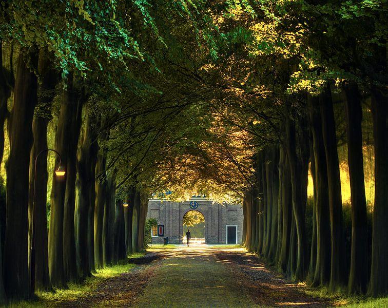 A walk down the lane van Niels Tichelaar