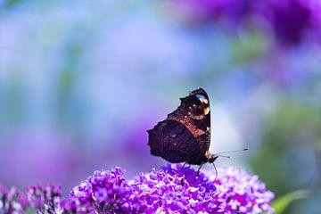 Vlinder, flinter van Karin Luttmer
